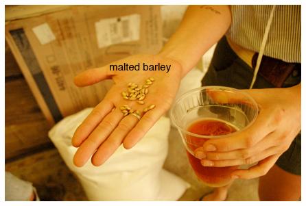 LO_barley